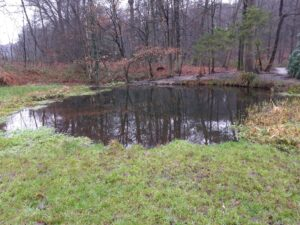 20201229_134910 (2) - Arnhem (NL) - Park Zijpendaal - St. Jansbeek - spreng - vijvertje