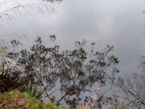 20201229_134953 (2) - Arnhem (NL) - Park Zijpendaal - St. Jansbeek - vijvrtje - spiegeling in het water