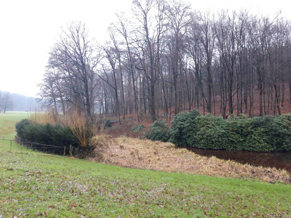 20201229_140916 (2) - Arnhem (NL) - Park Zijpendaal - rietkraag - spreng - St. Jansbeek