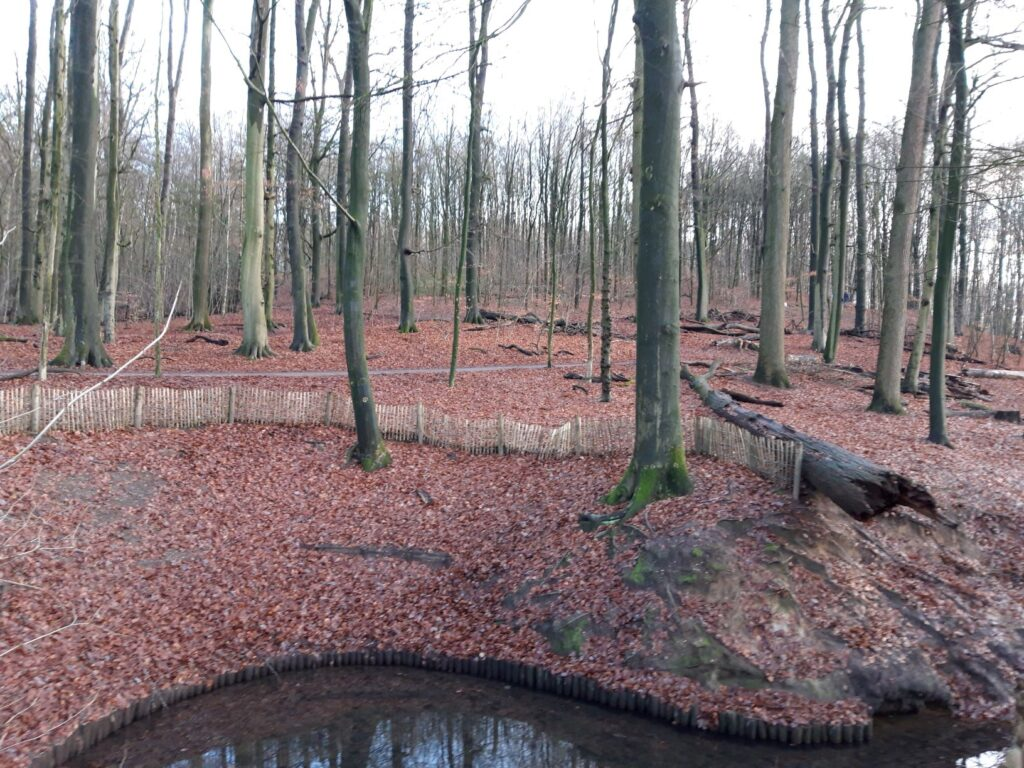 20210108_155631 (2) - Arnhem (NL) - Park Zijpendaal - Bicksberg - sprengkop - St. Jansbeek