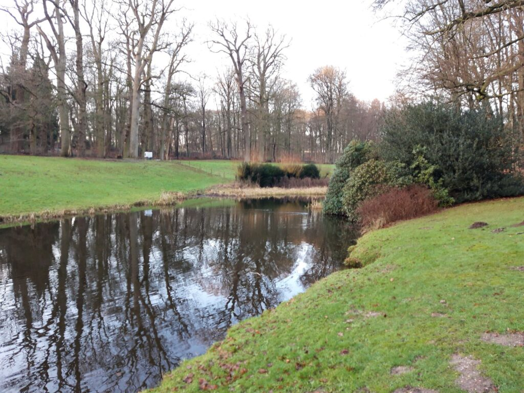 20210108_160143 (2) - Arnhem (NL) - Park Zijpendaal - rietkraag - spreng - St. Jansbeek