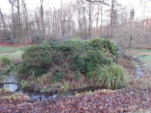 20210108_161043 (2) - Arnhem (NL) - Park Zijpendaal - St. Jansbeek - spreng - rododendrons - meanderende beek