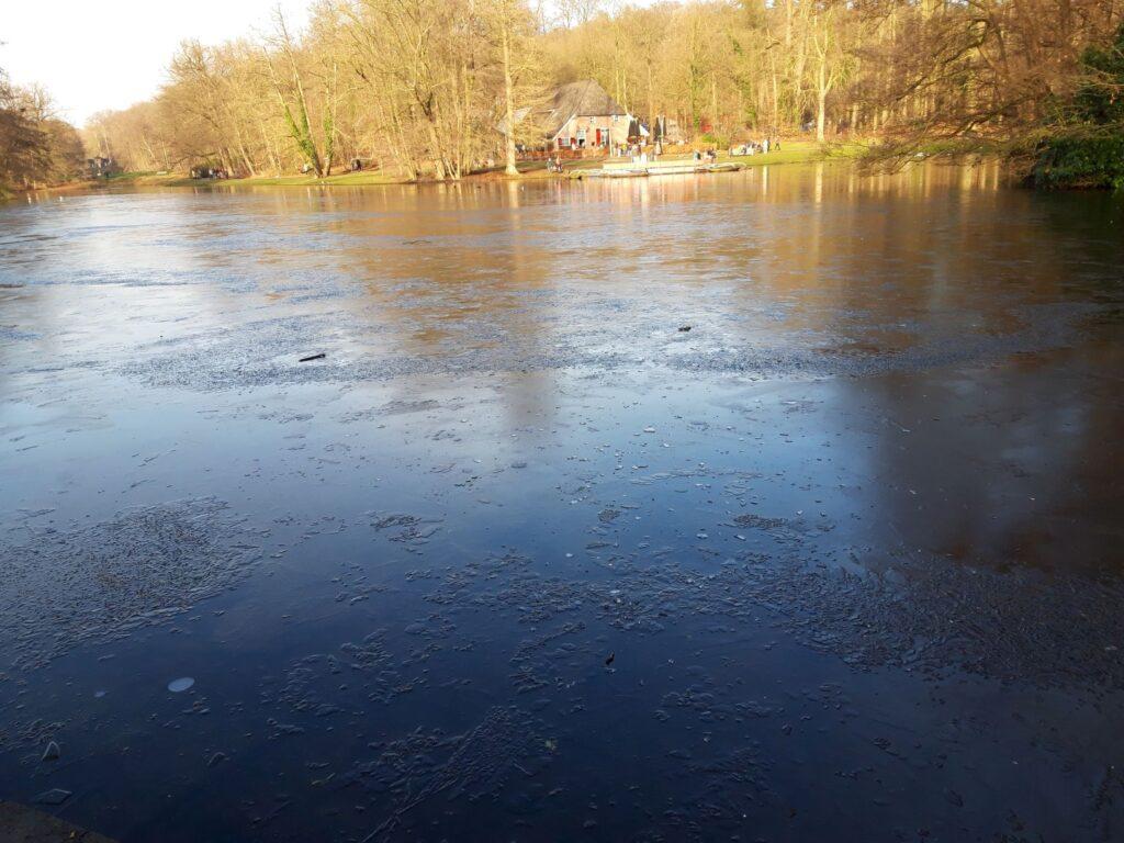 20210110_133856 (2) Arnhem (NL) - Park Sonsbeek - Grote Vijver - winterlicht - ijslaagje