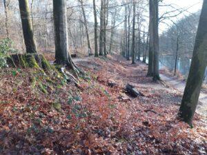 20210110_135930 (2) - Arnhem (NL) - Park Zijpendaal - terrassen in het landschap - beukenbos