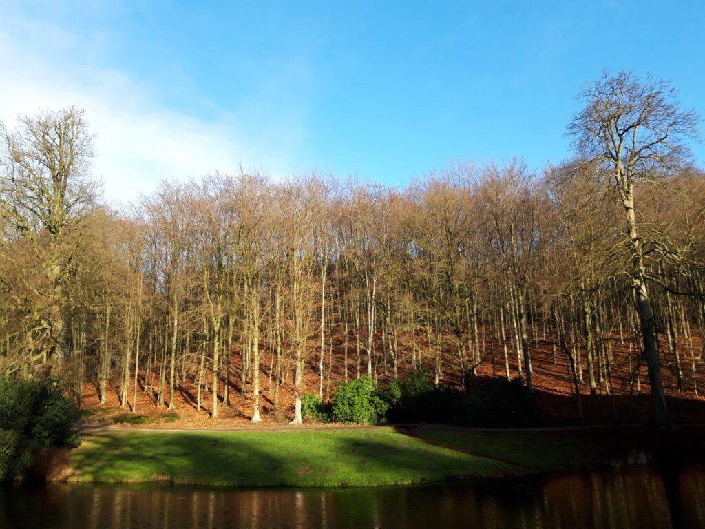 20210110_140347 (2) - Arnhem (NL) - Park Zijpendaal - vijver - Bicksberg