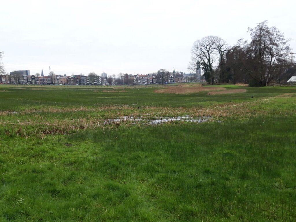 20210116_130254 (2) - Arnhem (NL) - Park Sonsbeek - St. Jansbeek - moerasweide - zicht op Arnhem